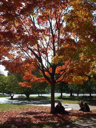 Fall meta picture