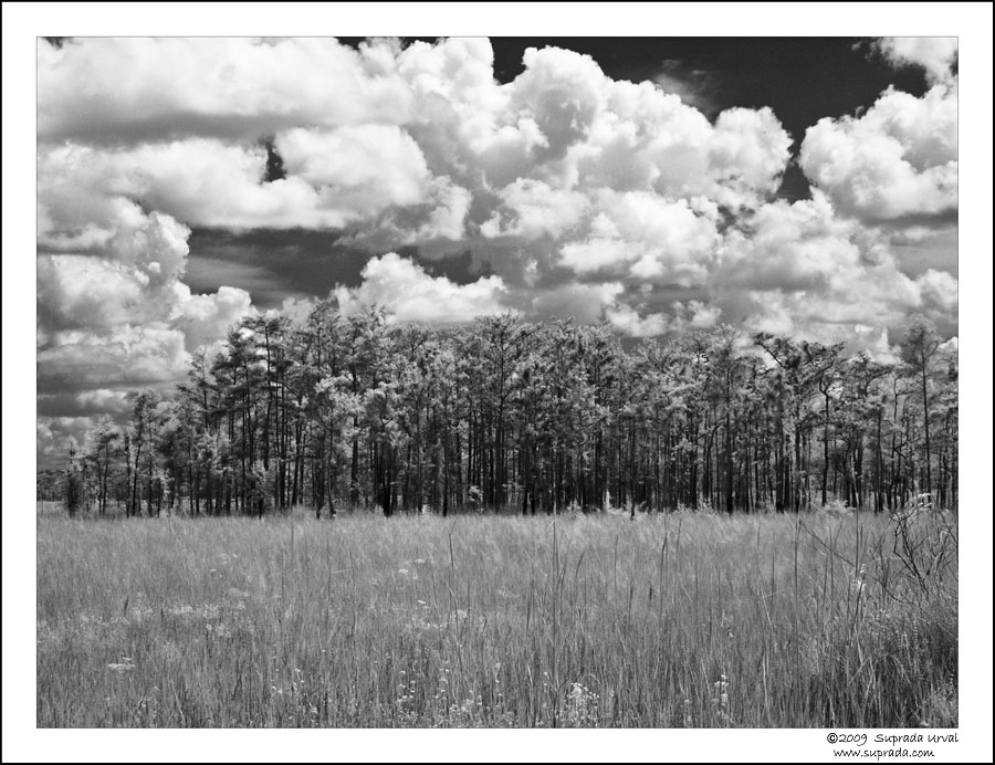 Everglades in Infrared - 3