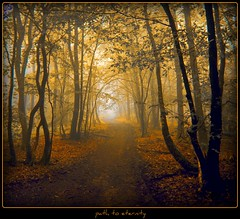 im Hohlweg -  path to eternity (NPP-publik_oberberg) Tags: wood mist tree art nature yellow fog forest germany way path creative cologne dust eternity oberberg hohlweg platinumphoto platinumsuperstar bestcapturesaoi theacademytreealley elitegalleryaoi aboveandbeyondlevel1