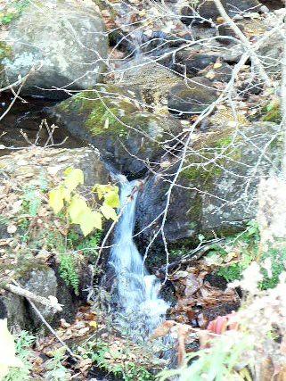 Adirondack Brook