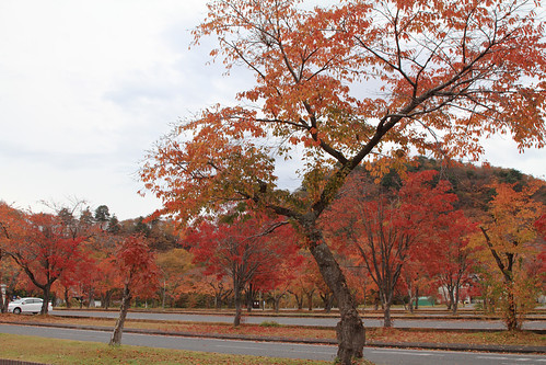 Colored trees near Lake Towada