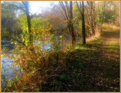 Before the autumn colors departed (moodyfan (Julie)) Tags: autumn trees light plants color fall pond path foliage mywinners abigfave