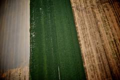 Crop circles (La Biche) Tags: field aerialview qubec agriculture ulm cropcircles champ deltaplane vuearienne pendulaire