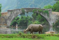 Water Buffalo at Yulong Bridge (photoal) Tags: china bridge water hat river yulong buffalo dragon mud guilin yangshuo bamboo raft waterbuffalo guanxi chaolong riverli