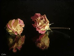 Rosas (Gelito) Tags: bodegn reflejo rosas gelito a3b tff1 cruzadatemtica