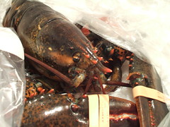 lobster revealed (moriah.) Tags: cooking brooklyn lobster fairway redhook whathaveidone