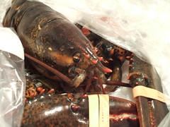 lobster revealed (moriah.) Tags: cooking brooklyn lobster fairway redhook whathaveidone