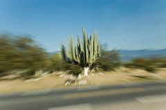 Reserva de la Biosfera Tehuacan (srmurphy) Tags: holiday tag3 d50 geotagged mexico fotografie urlaub natur pflanze tehuacan puebla 2009 mexiko distritofederal kaktus rundreise djoser kakteen lateinamerika mittelamerika santaines tamronspaf1750mmf28xrdiiildaspherical exif:iso_speed=200 exif:focal_length=42mm camera:make=nikoncorporation reinzoomen riesenkaktus camera:model=nikond50 exif:make=nikoncorporation geo:lat=1943062232 geo:lon=9917066422 exif:model=nikond50 geo:city=santaines geo:state=distritofederal exif:lens=170500mmf28 geo:countrys=mexiko reservadelabiosferatehuacan geo:lat=1839883634 geo:lon=9740478516