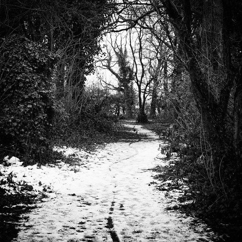 Snowy Path, Monks Walk Woods