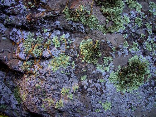 Lichen Rocky Nook Park