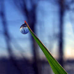 Blue Sky at Sunrise (ecstaticist) Tags: blue trees sky canada tree nature water grass sunrise square focus bc columbia victoria drop casio explore dew refraction droplet british blade frontpage