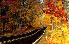 Autumn Copper Harbor (Brian Callahan (Luxgnos.com)) Tags: road autumn trees film leaves drive michigan gimp negative upperpeninsula copperharbor coth vuescan utatafeature anawesomeshot colorphotoaward flickraward briancallahan worldwidelandscapes optekahd2 saariysqualitypictures daarklands shinsanbc visiblytalented luxgnosphotography luxgnosis wwwluxgnoscom