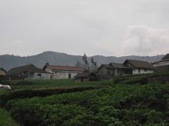 IMG_0581 (elvina24) Tags: indonesia java mountbromo