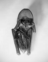 mummy frog tummy (CassieBrownPhoto) Tags: macro film 4x5 160vc largeformat kodakportra