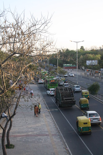 City Season – Leaf-dropping in Delhi