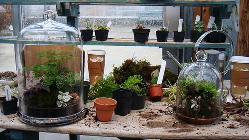 terrain plants terrarium containers