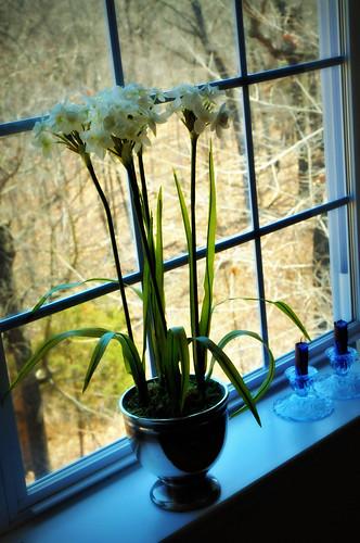 29/365 - Spring window