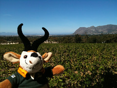 The Constantia Winelands