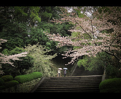 The Ascent (kaoni701) Tags: park travel tree japan stairs canon landscape temple japanese spring kyoto powershot  cherryblossom  sakura jpeg kansai compact s90 chionin  maruyama    matsubaracho