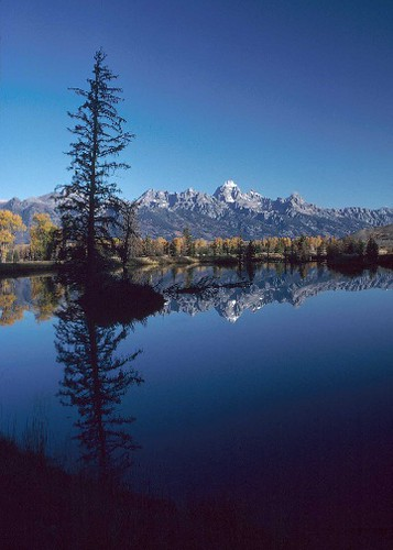 This constructed wetland near Jackson, Wyoming provides habitat for fish and other wildlife.