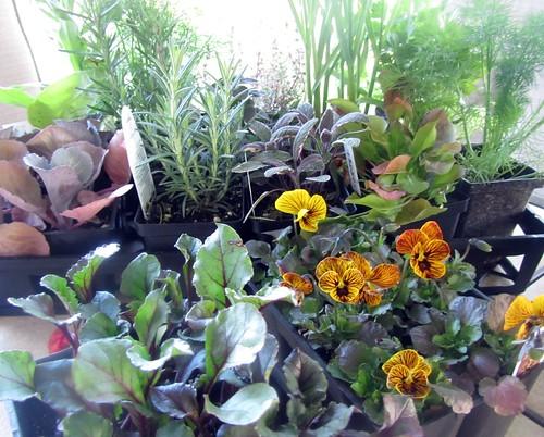Garden Loot