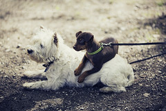 we all need somebody to lean on. (kvdl) Tags: camping friends dog pets ontario dogs togetherness friendship may goderich pointfarmsprovincialpark canonef135mmf20lusm kvdl TGAM:photodesk=togetherness TGAM:photodesk=pets2011