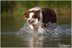 Lucy im Wasser