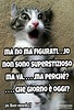 https://www.facebook.com/MossoTiziana/ #Tiziana #Mosso #Tizi #Twister #Titty #lovecat #cat #love #link #page #facebook #aforisma #citazione #frase #buongiornoatutti #superstizione #venerdi #17 #sfortuna #paura #credenze #talismano #portafortuna #coccinell (tizianamosso) Tags: superstizione corna link venerdi ridere quadrifoglio divertente lovecat facebook twister talismano tizi mosso coccinelle buongiornoatutti frase 17 page citazione tiziana sfortuna paura iella risate titty portafortuna love barzelletta credenze aforisma cat