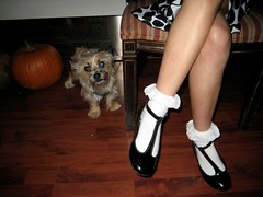 Party Dog (Lynn Friedman) Tags: sanfrancisco california ca party usa dog halloween puppy pumpkin stock danielle whitesocks gettyimages lowerhaight stockphoto sfist anklesocks 94117 partydress fillmorest patentleathershoes 7x7 cafedusoleil loha blackpatentshoes lacesocks lynnfriedman wallerst