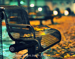 Bench in Autumn.  © Glenn Waters. Japan.  Over 13,000 visits to this photo. (Glenn Waters ぐれんin Japan.) Tags: park autumn fall leaves japan night bench lights leaf nikon bokeh explore aomori hirosaki 秋 frontpage 東北 公園 touhoku 夜 tsugaru 弘前 青森県 ニコン 津軽 nikkor85mmf14d nikkor85mm14d d700 bokehwednesday ぐれん glennwaters
