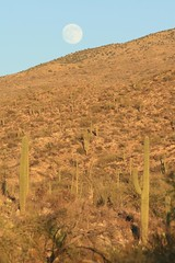 IMG_9737 (simon_travelboy) Tags: arizona tucson saguaronationalpark