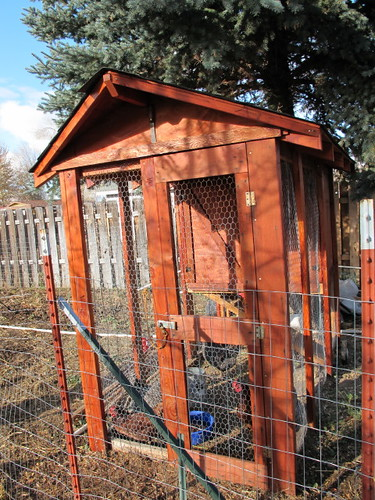 Newly stained chicken coop