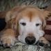 Golden Sleeper