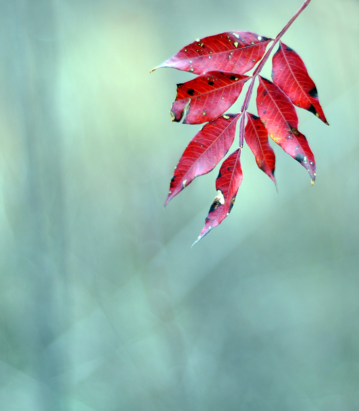 Single Fall Leaf
