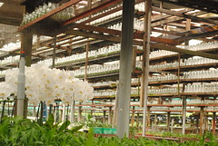 Orchid Nursery Section (View 4)