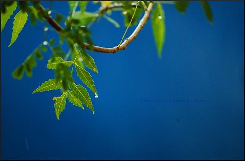 துளி / Drop by கார்த்திக் / Karthik'z.