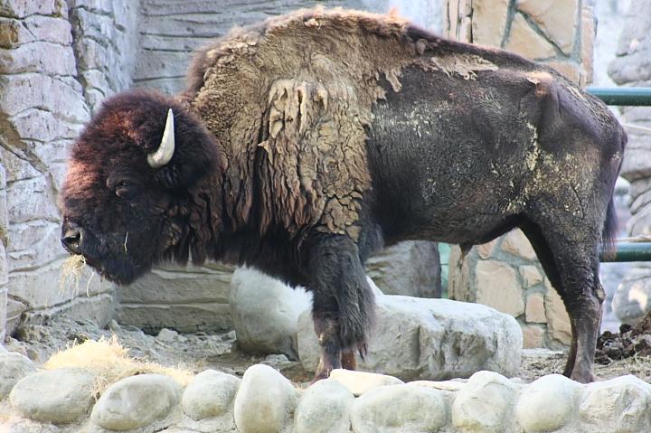 2010壽山動物園0032