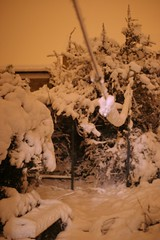 snow garden by night