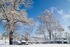 (paolafazzi) Tags: canon neve inverno tosco emiliano appennino ghiaccio galaverna cervarezza paolafazzi