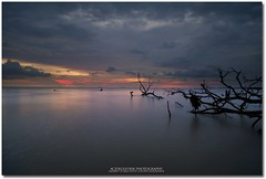 drifted away (acidsulfurik) Tags: longexposure sunset bluehour digitalblending nohdr kelanang acidsulfurik pantaikelanang kelanangbeach shazral sangphotographer drifteddeadtree