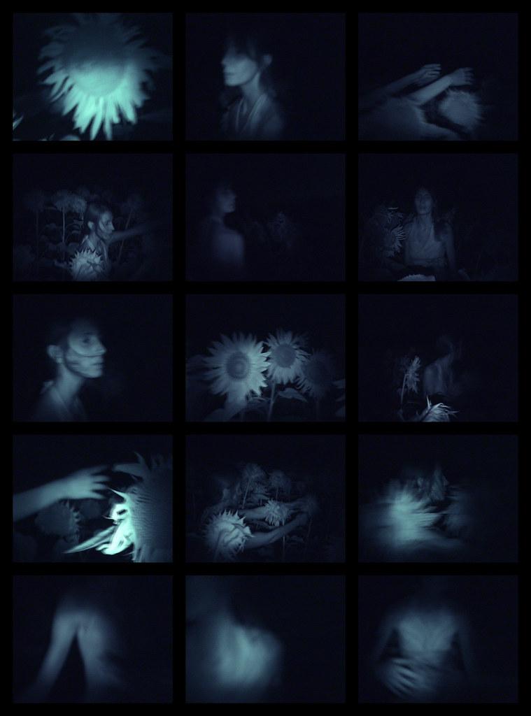 A night in days ''''la forêt des astres copie