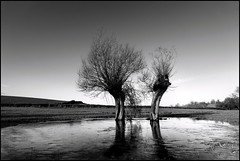 A Dialogue in Somerset (angus clyne) Tags: christmas old trees winter england ice field puddle frozen nice pond ancient frost mud boxingday somerset willow covered hedge swamp marsh bog dialogue twotrees textured pollard flikcr coppice crewkerne anthropomorphizing merriott amijust leefilters aretheyfighting thesecretlifeoftrees dotheyloveeachother dotheyhateeachother aretheyembracing