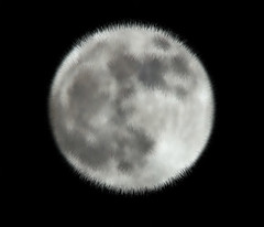 Our Moon (paulinuk99999 (back in Ghana)) Tags: wolf fullmoon explore 800mm keyhaven paulinuk99999 sal70400g salx2tc