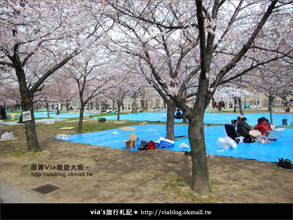 【via關西冬遊記】大阪城天守閣!冬季限定:梅園梅花盛開32