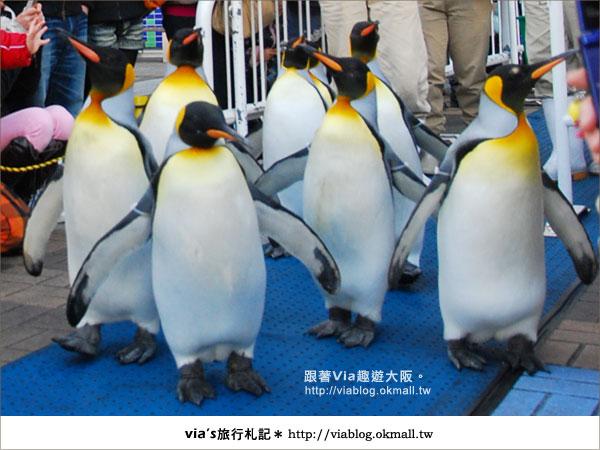【via關西冬遊記】大阪海遊館~冬季限定!無敵可愛企鵝遊行來囉!18