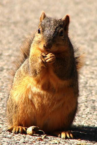 Peanut!
