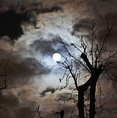 Moonlight (Queenofcalamity) Tags: trees moon nature silhouette night clouds astrophotography moonlight nightsky canon500d canon1755mm moonlightthroughtrees queenofcalamity