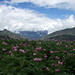 Ayacucho region, Peru