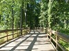 Where to? (This Incredible World) Tags: wood bridge light shadow summer forest dark walking woods shadows bright path background trail pathway naturewalk woodenbrigde