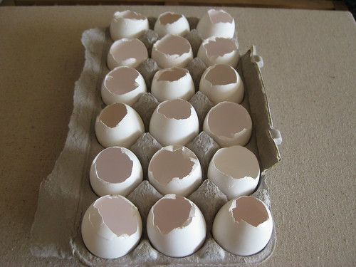 Eggshell seedlings (3)